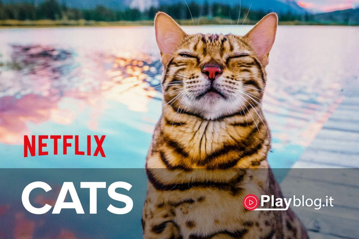 cats netflix film documentario