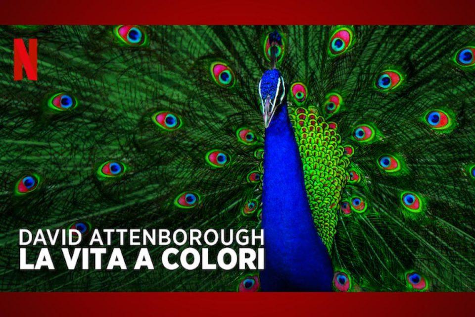 David Attenborough: la vita a colori disponibile oggi su Netflix